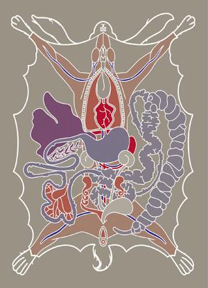 Guts Educatieve Illustratie Anatomie Saskia Schreven